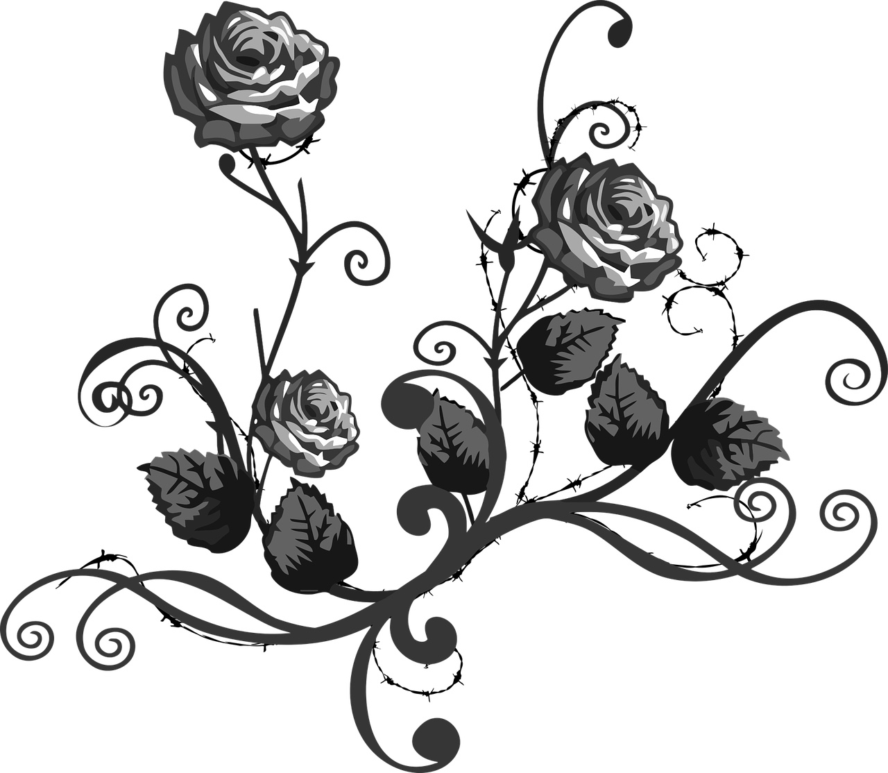 The White Rose in Text and Song