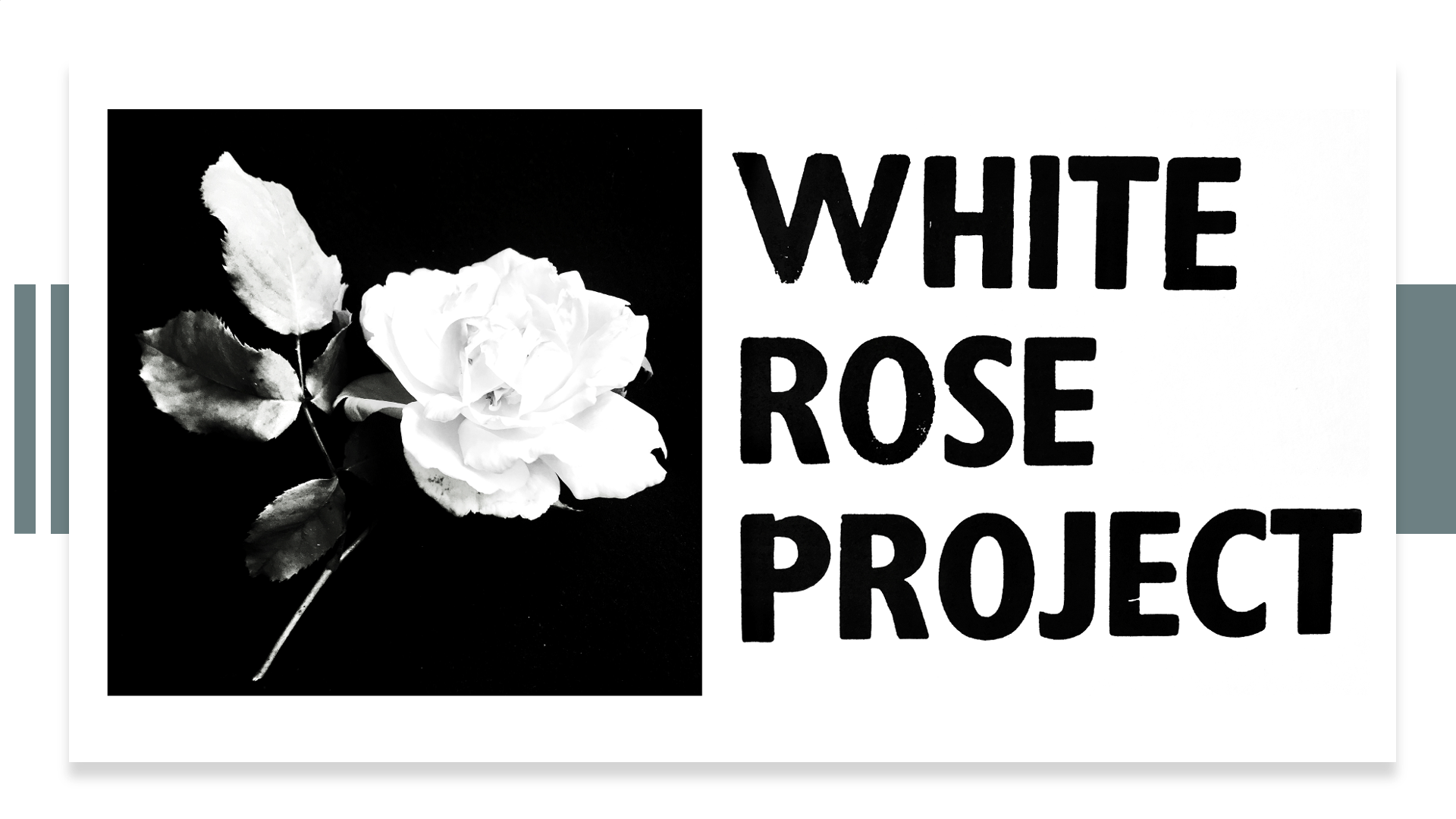 White Rose Translation Project 2020-2021